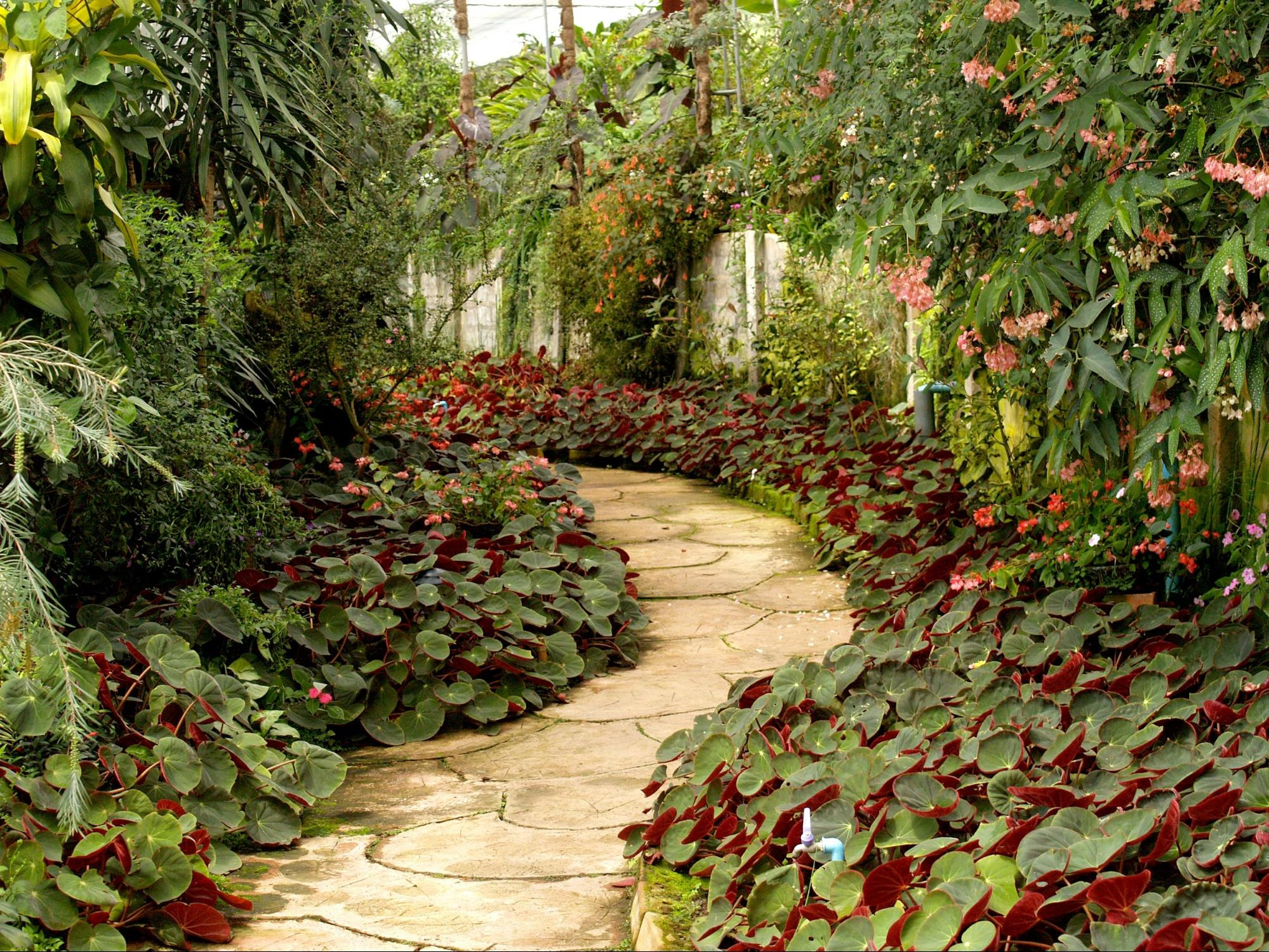 How much does landscaping and gardening cost in Sydney